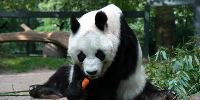 Bao Bao China